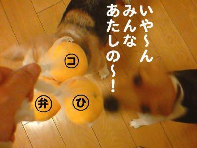 柚子3兄弟