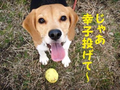 じゃあ幸子!
