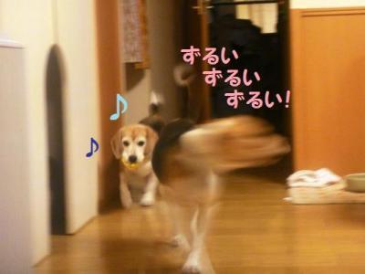 幸子 コテツを魅了