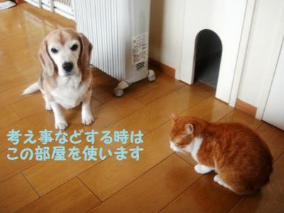 犬部屋 猫部屋
