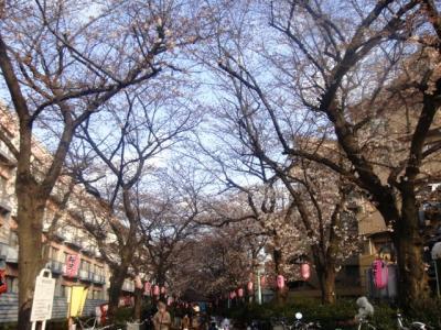 桜祭り 2