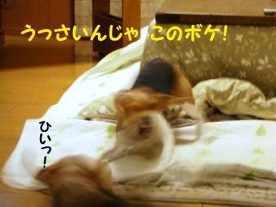 TDL コテツさんとひなちゃん3