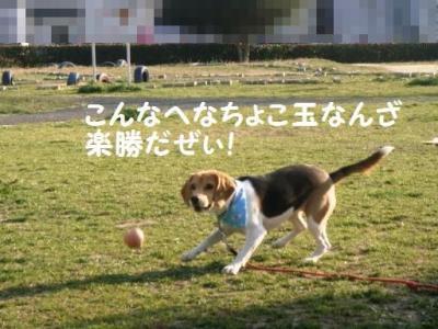 テツコ ひなたボール1