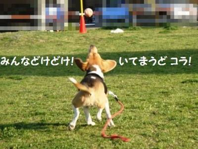 テツコ ひなたボール3