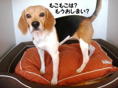犬部屋 春支度1