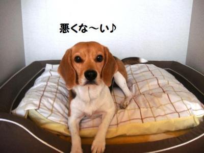 犬部屋 春支度2