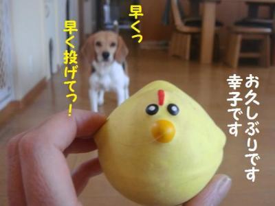 シャンプー 6 幸子
