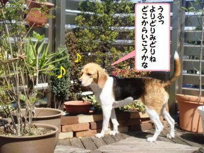 屋上庭園 1 ひなっち