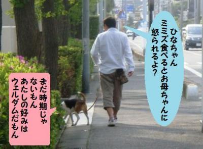 散歩 1 ひなちゃんとお父ちゃん