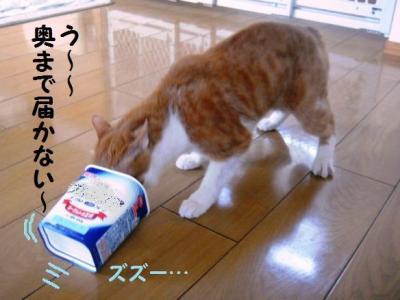 弁ちゃん バースデー 1 悪戦苦闘