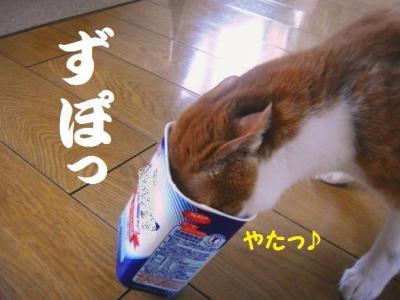 弁ちゃん バースデー 2 ズボッ