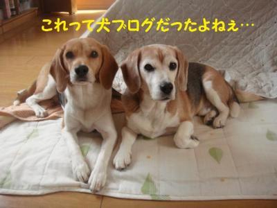 弁ちゃん バースデー 3 犬ブログ