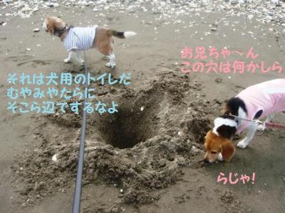 海デビュー 3 犬用トイレ