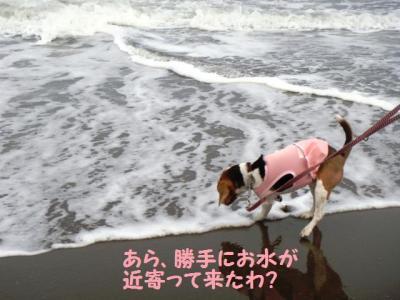 海デビュー 5 ちめたい