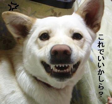 てんちゃん 6 ラスト