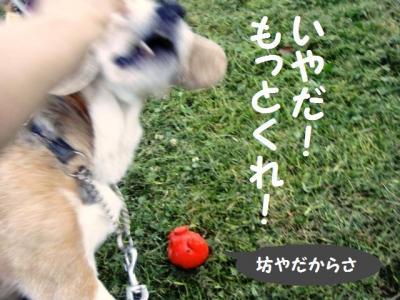 信頼関係 5 ひなたちゃんっ!