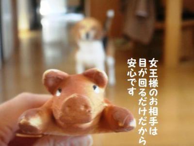 スプラッシュ 6 子豚師匠