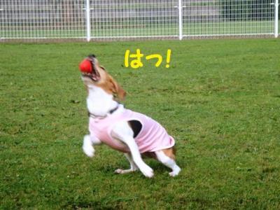 道満 4 ボール遊び