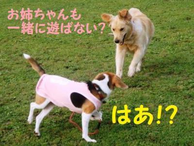 ゴールデン 5 お姉ちゃん遊ぼう!
