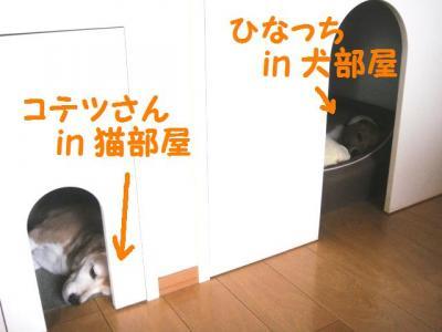 夏が 2 犬部屋猫部屋