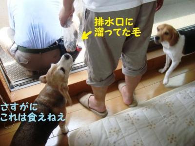点検 11 犬の毛