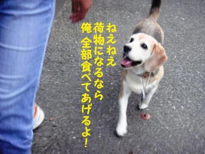 お散歩 8 帰り道