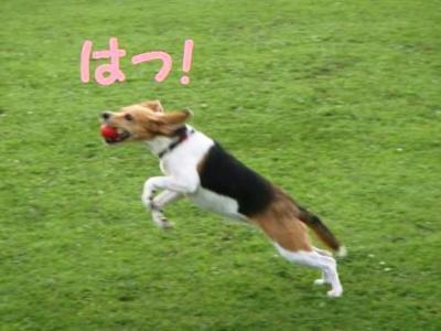 波乱 4 はっ!