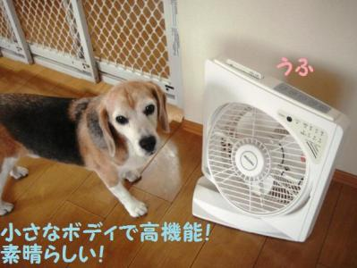 扇風機 6 どすか!