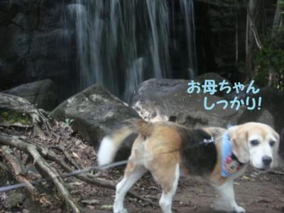 森林公園 6 滝