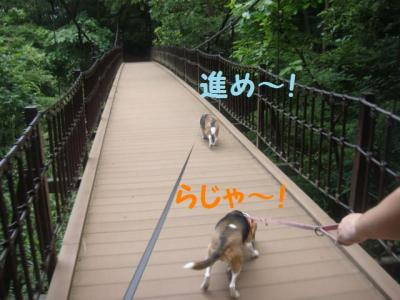 森林公園 9 吊り橋