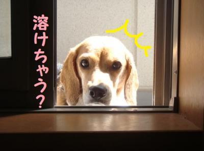 頭寒足熱 3 ひなちゃん