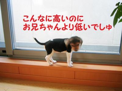 パピー 2 ちっちゃ!