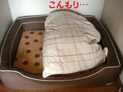 呪い 1 犬部屋