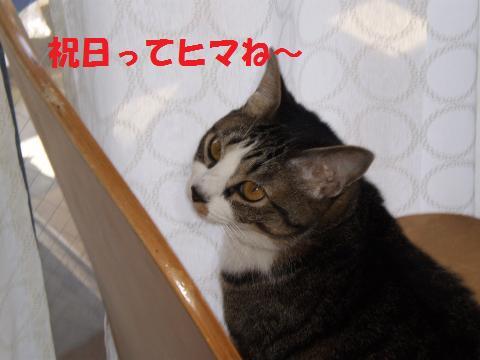 002_convert_20090429185508.jpg