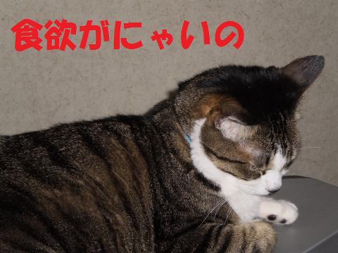 002_convert_20090716223718.jpg