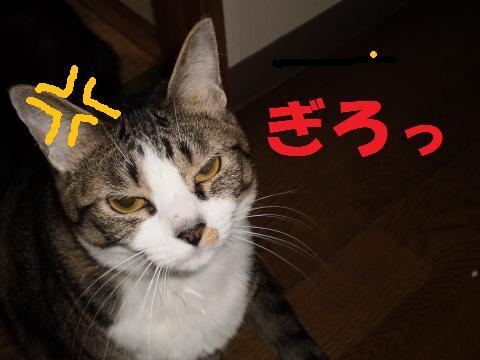 003_convert_20090415191757.jpg