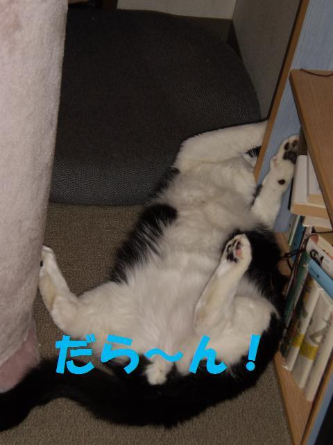 003_convert_20090523224428.jpg