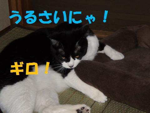 003_convert_20090708230746.jpg