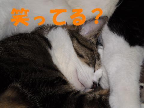 003_convert_20090714194935.jpg