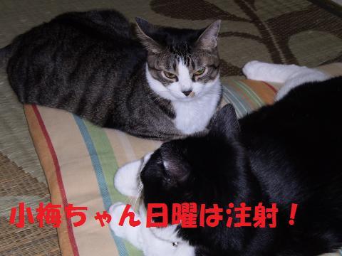 003_convert_20090801001413.jpg