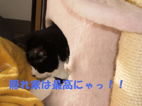 004_convert_20090515185711.jpg