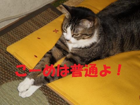 004_convert_20090523224537.jpg