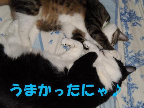 004_convert_20090524212918.jpg