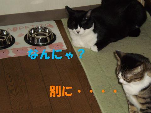 004_convert_20090604203730.jpg