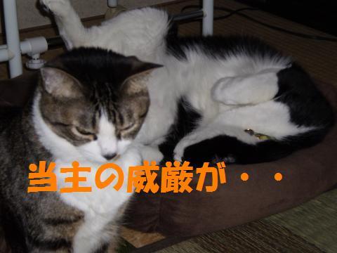004_convert_20090612215941.jpg