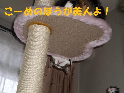 004_convert_20090805004434.jpg