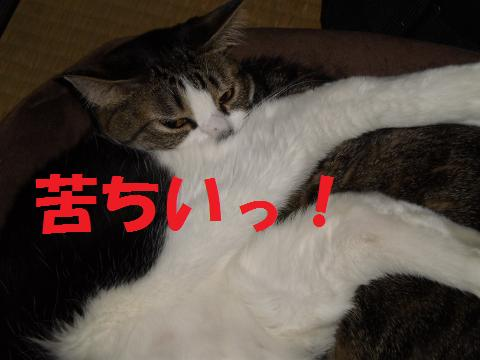 005_convert_20090503201531.jpg