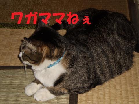 005_convert_20090708230844.jpg