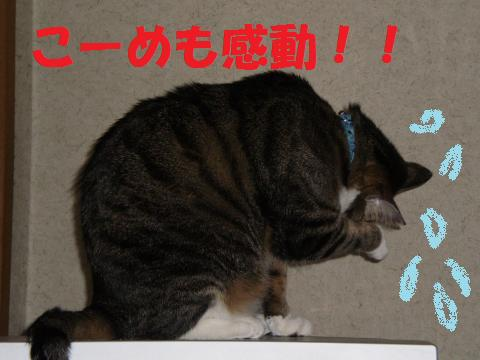 005_convert_20090711225148.jpg