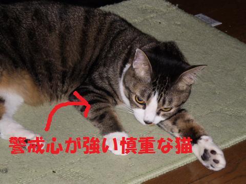 006_convert_20090701230728.jpg